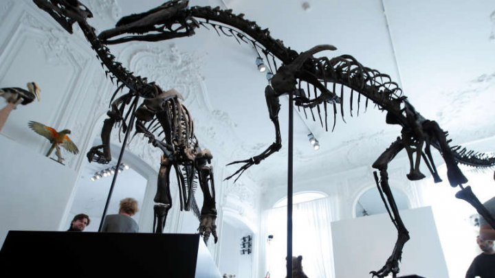 Cei doi dinozauri, un Allosaurus şi un Camptosaurus, scoşi la licitaţie la Paris, nu şi-au găsit cumpărători