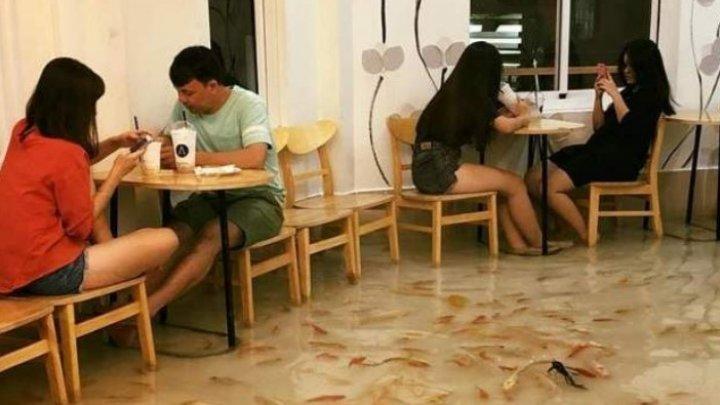 Peștii ÎNOATĂ pe PODEA. Vizitatorii unui restaurant inedit din Vietnam se descalță la intrare (Galerie FOTO)