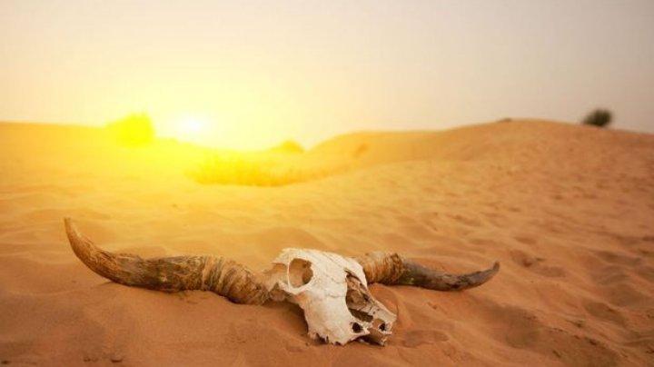 STUDIU: Oamenii au distrus 60% din biodiversitatea globală a animalelor