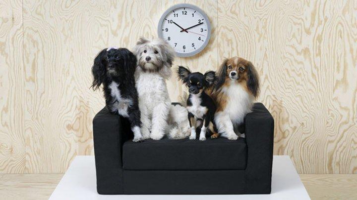 Mai mulţi câini au fost adoptaţi într-un magazin Ikea din Sicilia