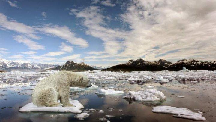 Informațiile privind încălzirea globală sunt alarmante. Topirea ghețarilor nu mai poate fi controlată