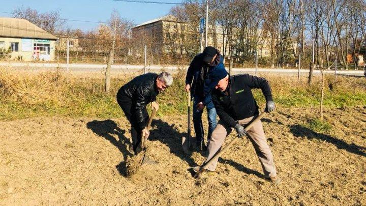 Mobilizare maximă în satul Geamăna. Ministrul Jizdan şi localnicii au sădit 150 de copaci (FOTO)