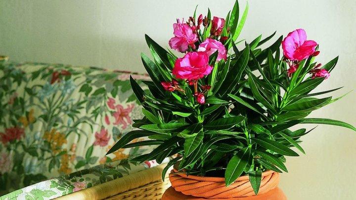Planta minunată pe care o ai acasă şi care te OTRĂVEŞTE
