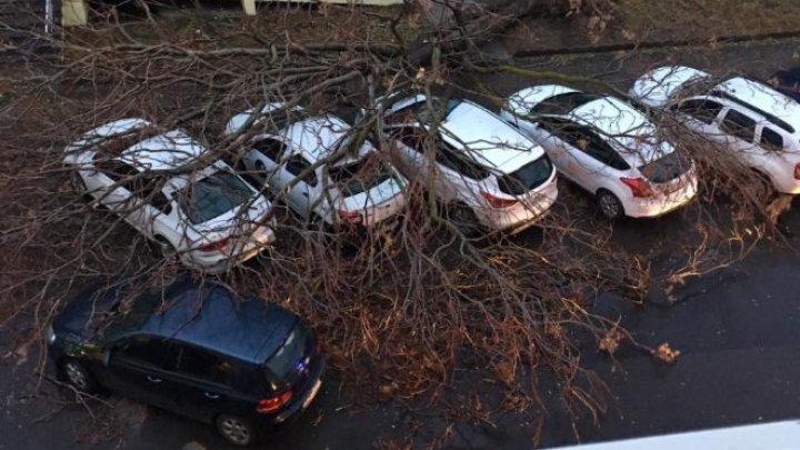 PRIVELIŞTE APOCALIPTICĂ. Şase automobile parcate, AVARIATE de un copac doborât de vânt (FOTO)