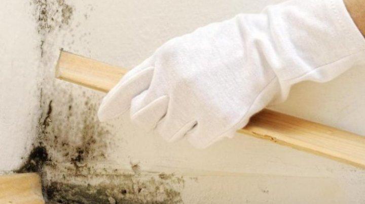 Cum să îndepărtezi mucegaiul de pe perete. Soluţia naturală, ieftină şi eficientă