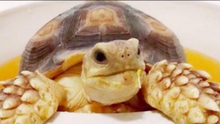 Un întreg orăşel din California este în alertă, după ce o ţestoasă a dispărut fără urmă