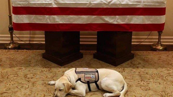 PÂNĂ LA LACRIMI. Cum a fost surprins câinele fostului președinte american George Bush