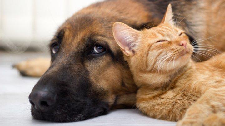 Adopţia animalelor, INTERZISĂ de sărbătorile de iarnă. Din ce cauză o ţară europeană a luat măsura