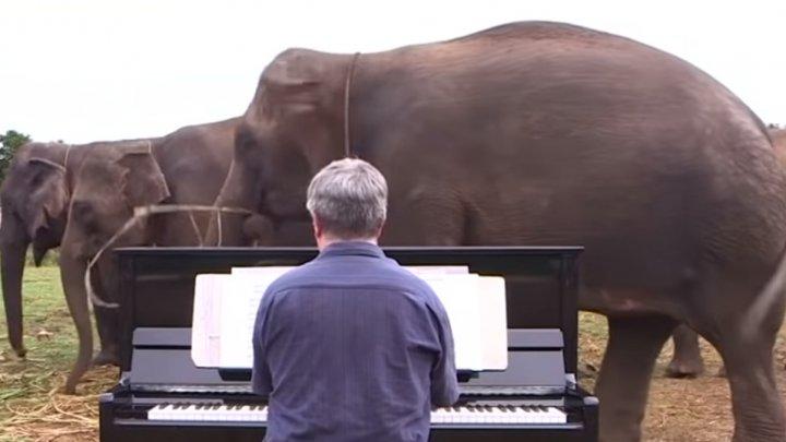 IMAGINI EMOŢIONANTE! Un muzician CÂNTĂ LA PIAN pentru nişte elefanţi bătrâni. Reacţia animalelor