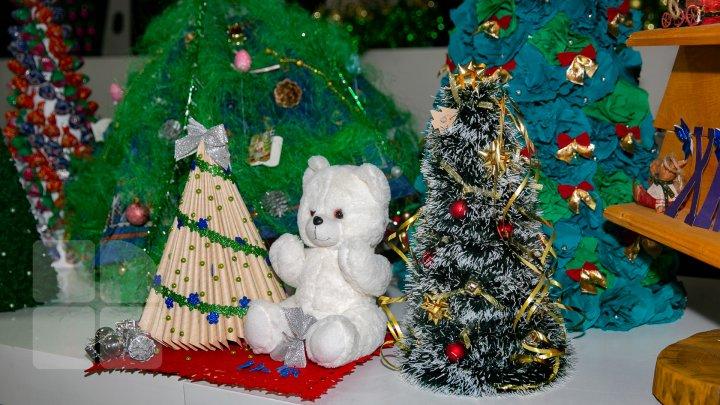 Pomi de Crăciun INEDIŢI la ASEM. Banii adunaţi din vânzarea brazilor vor fi donaţi unui orfelinat (FOTOREPORT)