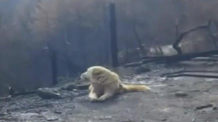EXEMPLU DE DEVOTAMENT: Un câine şi-a aşteptat stăpâna mai bine de-o lună, lângă casa care a ars într-un incendiu