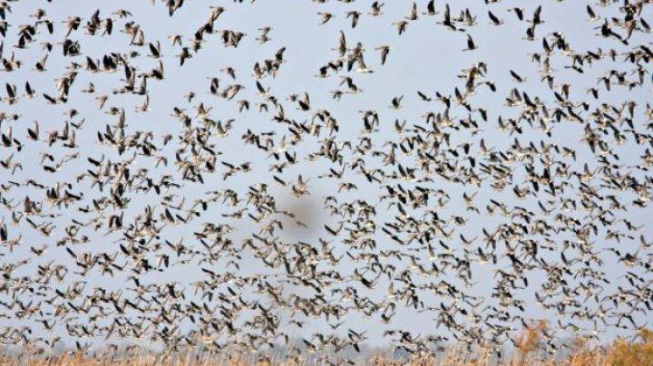 STUDIU: Cercetătorii au descifrat modul în care păsările au evoluat pentru a avea penaje colorate