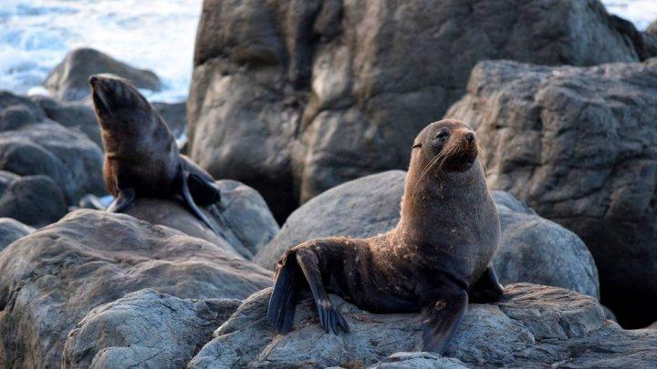 INUMAN! Cadavrele decapitate a şase pui de focă cu blană, descoperite într-un golf turistic