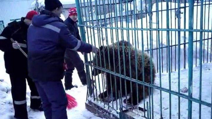 Îngrozitor! O femeie a rămas fără braţ după ce a vrut să hrănească un urs