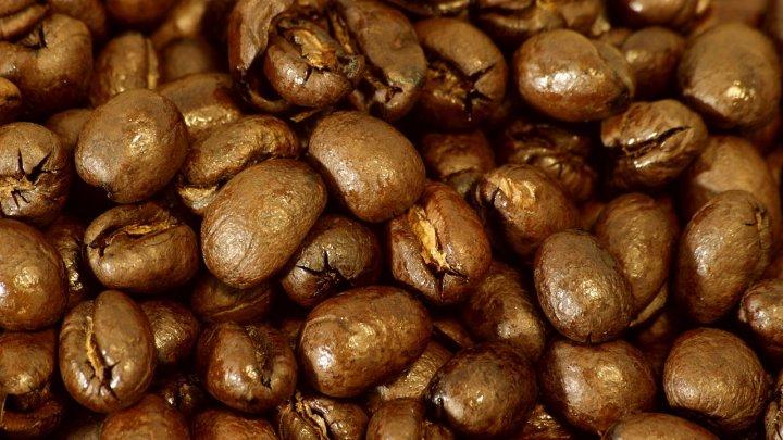 Veste rea pentru iubitorii de cafea. Motivul din care arborele de cafea dispare progresiv