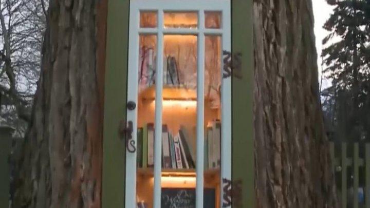 Biblioteca din copac. Cui îi aparține ideea inedită și care este scopul acestui proiect