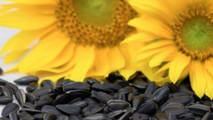 Bine de ştiut! De ce este bine să mănânci semințe de floarea soarelui