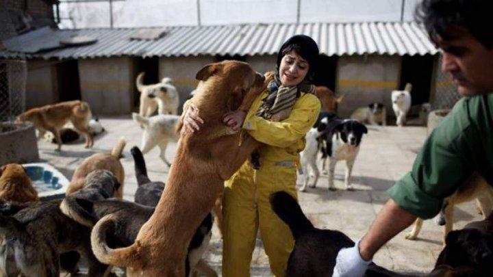 Ţara în care stăpânii primesc PEDEPSE EXTREME dacă îşi scot animalele în spaţii publice