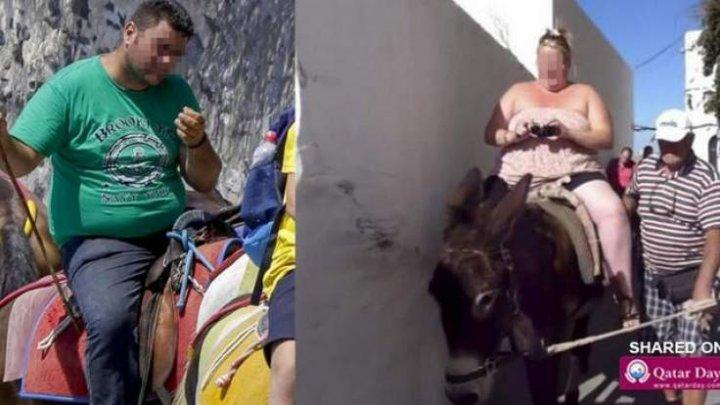 Turiștii din Grecia nu mai au voie să călărească măgarii (VIDEO)