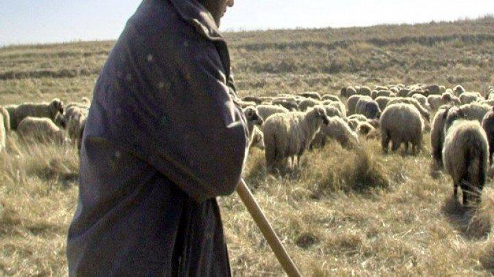 FILMUL unei crime ca în Mioriţa. Un cioban din Sălcuţa Nouă, UCIS ÎN BĂTAIE de alţi doi păstori