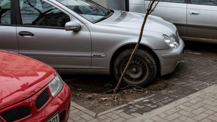"""Cu ce a greșit copacul acesta de pe Bulevardul Ștefan Cel Mare? Cum a fost """"pedepsit"""" de niște șoferi care nu știu să parcheze (FOTO)"""