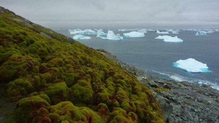 Şapte continente în ŞAPTE ZILE. Unul dintre cele mai dure maratoane a început din Antarctida