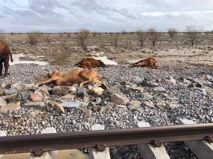 Dezastru în Australia. Mii de bovine au murit în urma inundaţiilor catastrofale (IMAGINI CU PUTERNIC IMPACT EMOŢIONAL)