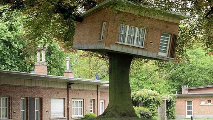 Arată ca-n povești! 13 case în copaci, așa cum n-ai mai văzut (GALERIE FOTO)