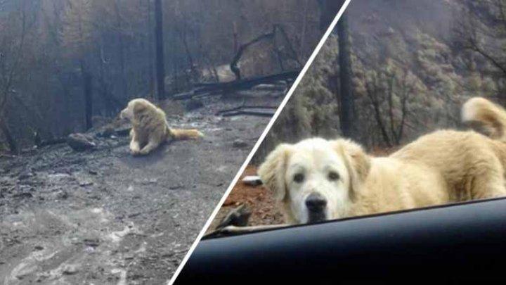 Un câine dispărut în timpul incendiului devastator din California, găsit după 101 zile