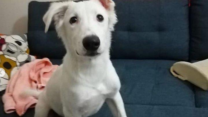 REACŢIA ÎNDUIOŞĂTOARE a unui câine când află că o să fie adoptat