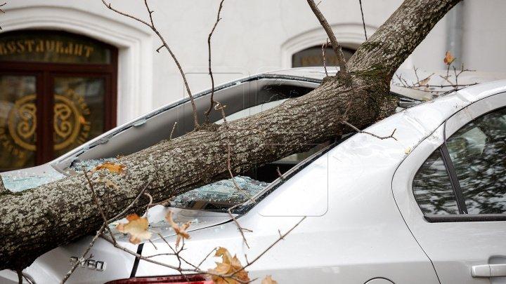 ACCIDENT VIOLENT LÂNGĂ CĂUȘENI. Șoferul a derapat de pe şosea și a ajuns într-un copac