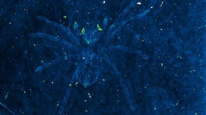 DESCOPERIRE IMPRESIONANTĂ: Paleontologii au găsit păianjeni cu ochi de pisică