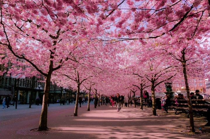 IMAGINI DE LA CARE NU-ŢI POŢI LUA PRIVIREA! Alei din toată lumea care arată FANTASTIC primăvara