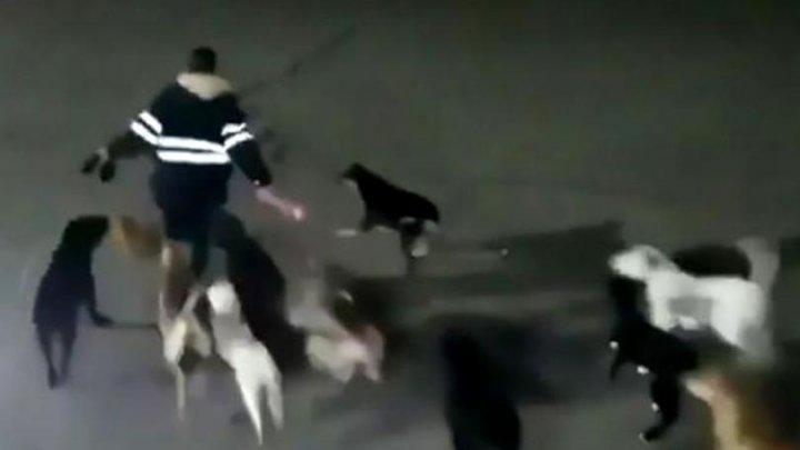 Momentul terifiant în care o femeie a fost ucisă de o haită de câini (IMGINI CU PUTERNIC IMPACT EMOȚIONAL)