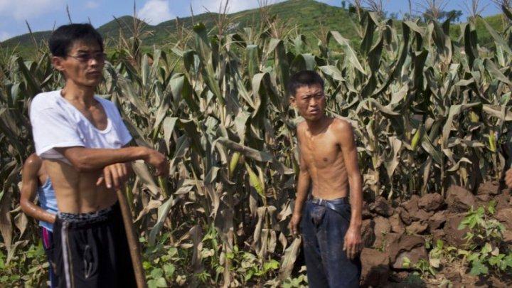 Coreea de Nord se confruntă cu o criză alimentară. Aceasta cere ajutor organizaţiilor internaţionale