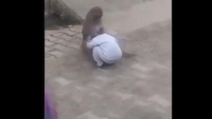O maimuță a răpit un copil de doi ani ca să se joace cu el (VIDEO)