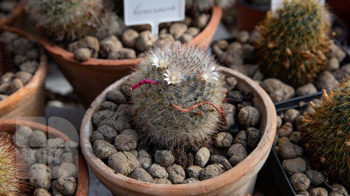 PRIVELIŞTE de PRIMĂVARĂ la Grădina Botanică. Au început să înflorească cactușii (FOTOREPORT)