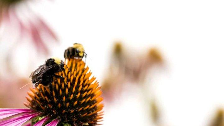 STUDIU: Lumea este în pragul unei amenințări uriașe ca urmare a exterminării în masă a insectelor