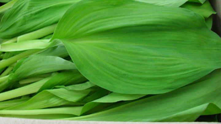 Leurda, planta miracol a primăverii. Vindecă sute de boli