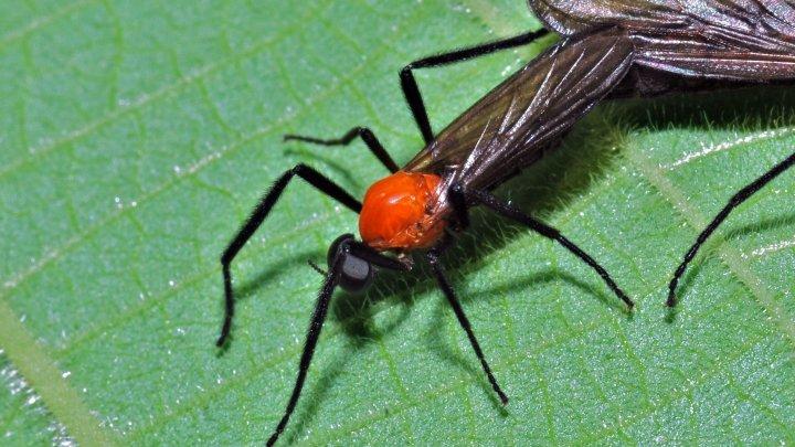 Gândacul cu NUMELE FOSTULUI TĂU. Ce va păți acesta de Ziua Îndrăgostiților, potrivit unei tradiții dintr-o Grădină Zoologică