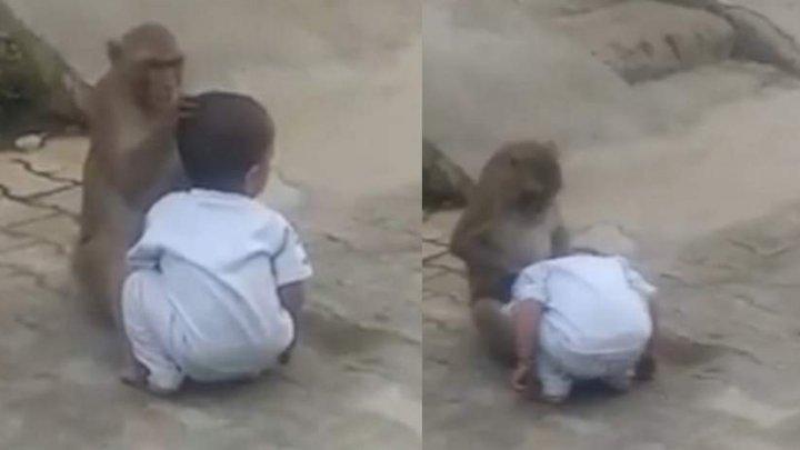 Băieţel de doi ani, răpit de o maimuţă care voia să se joace cu el. REACŢIA animalului când o femeie vrea să ia copilul (VIDEO)