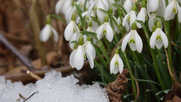 MĂRȚIȘOR: Tradiții și obiceiuri de 1 Martie