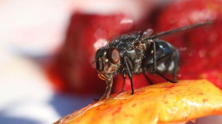 """O femeie s-a întors din vacanţă cu o larvă de muscă ce """"şi-a făcut casă"""" în fruntea ei"""
