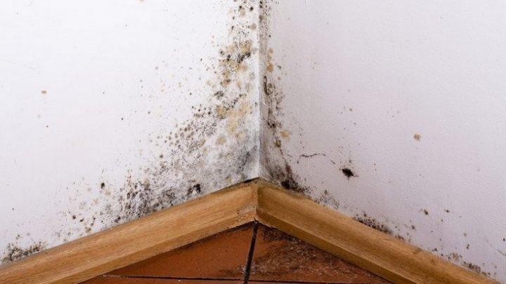 Cum scapi de mucegaiul din casă în mod natural şi pentru totdeauna