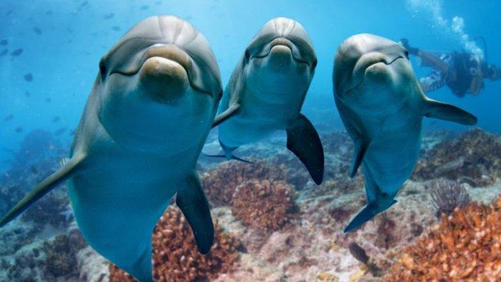 Știai? Delfinii își aleg prietenii pe toată viața