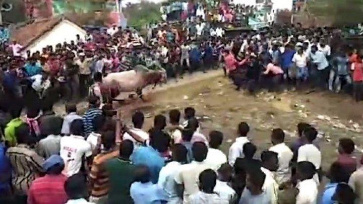 IMAGINI TERIFIANTE în India. Un taur a intrat într-o mulțime de oameni la un festival religios. Sunt răniți (VIDEO)