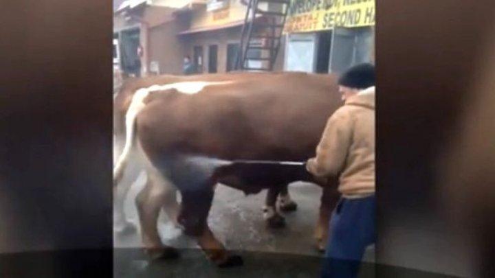 Așa ceva nu ai mai văzut. Un bărbat și-a dus vacile la spălătoria auto (VIDEO)