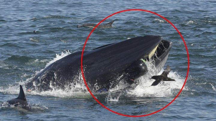 LA UN PAS DE TRAGEDIE. Un scafandru a supravieţuit miraculos, după ce a fost înghiţit de o balenă (IMAGINI CU PUTERNIC IMPACT EMOŢIONAL)