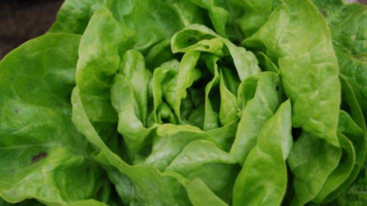 Trebuie să știi asta! Cum alegi cea mai bună salată verde. Trucul pe care puţini îl ştiu