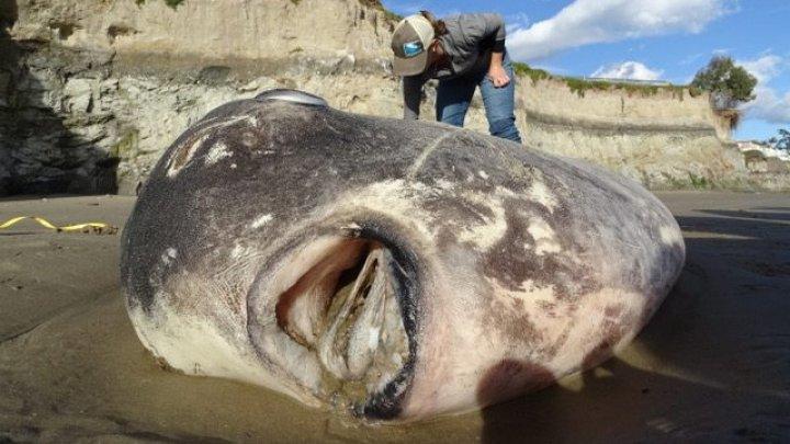 Creatură marină BIZARĂ descoperită pe o plajă din SUA. Reacţia cercetătorilor este una neobişnuită